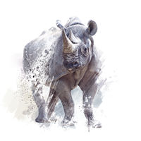 black rhinoceros watercolor on white background