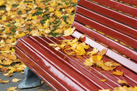Dark red wooden bench with dry maple leaves in autumn