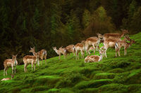 Deers near the Forest