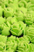 light green rose background, close up shot, valentine day concept.
