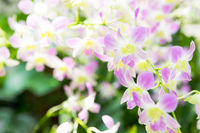 Beautiful orchid flowers in garden