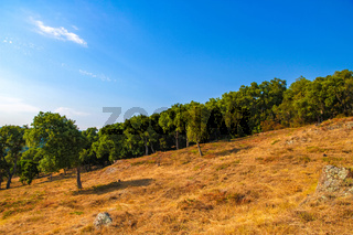 View on the trees in the countryside of South France