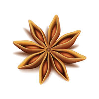Realistic vector top view of dry star anise fruit and seeds isolated on white