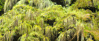 Green Moss A Detailed Background