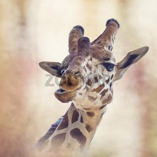 giraffe head digital painting
