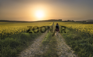 Woman with dog walking through rapeseed fields