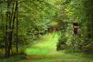 Waldweg mit Jagdhochsitz