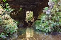 River crossing cave surrounded by rain forest vegetation