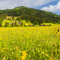 Green hills in Austria