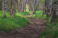 Winding Trail in Big Springs Park lower