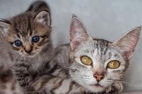 Mom cat with kitten indoor