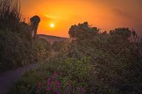 Walking path along the Cornish coast at sunset