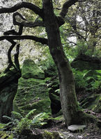 tree and standing stone rock formation in dark green forest with moss