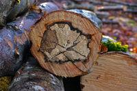 Buche, Rotbuche, Baumscheibe, Querschnitt, Baummaserung