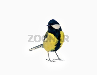 Great tit isolated on snow background