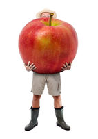 Funny gardener carrying a large red apple. Farmer hold big apple isolated on white background. Successful fruits grower. Large harvest of genetically modified foods.