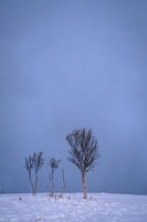 Barren trees among the mountain winter landscape