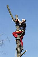 Schwierige Baumfällung