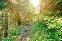 Wanderweg im Wald mit Sonne im Sommer