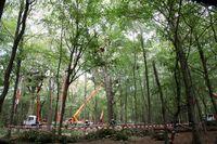 Räumung des Hambacher Forstes