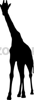 Silhouette of a high African giraffe on a white background
