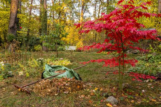 Laubharken im Garten im Herbst, raking of leaves in a garden in autumn