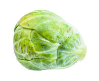 single ripe brussels sprout isolated on white