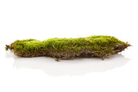 Green moss isolated on white bakground.