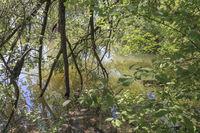 Naturaufnahme, Tümpel im Rheindelta, Bodensee, Österreich