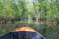 Small boat sailing on mangroves green water