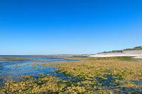 Ile de Ré - North coast