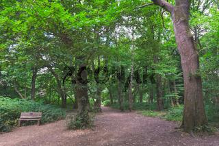Path through Banstead woods in Surrey