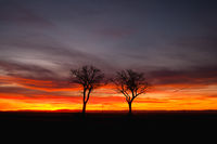 Lonely trees in dramatic sunset, Central Bohemian Upland, Czech Republic