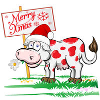 cow Santa Claus with merry christmas signboard. Isolated  illustration..eps