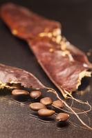Schote mit Samen der Gleditsia triacanthos