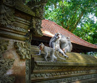 Monkeys on a temple roof in the Monkey Forest, Ubud, Bali, Indonesia