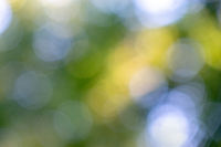Bright blue green and yellow bokeh circles on a green natural background. Blurred foliage.