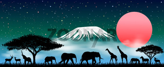 African animals at night