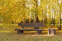 Bench under autumn birch trees