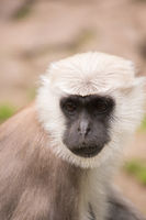 A little monkey looks into the camera