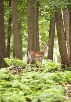 RE_Haltern_Naturwildpark_12.tif