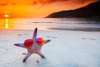 Starfish in sunglasses on sea beach