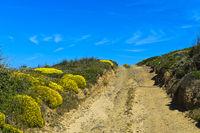 Feldweg mit blühenden Ginster Kissen, Algarve, Portugal