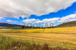 Landscape of golden fields