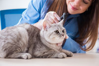 Cat being examining in vet clinic