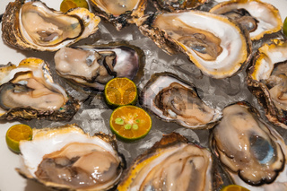 Fresh oysters platter at the seafood restaurant