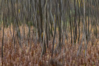 Abstract autumn trees in a forest