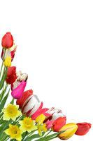 Blumen 1043