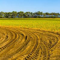 Breathtaking agriculture landscape