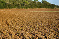 Arable land and winter crops